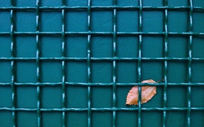 Picture sheet, the fence, background