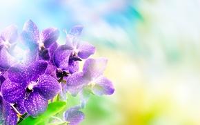 Picture background, purple, orchids, bokeh, closeup