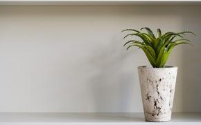 Picture shadow, shelf, pot, aloe