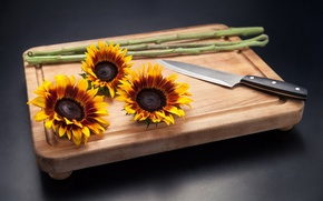 Picture flowers, background, knife