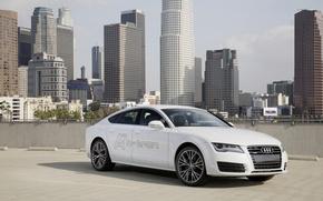 Picture Concept, Audi, Audi, the concept, quattro