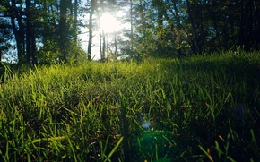 Picture summer, grass, nature, glade