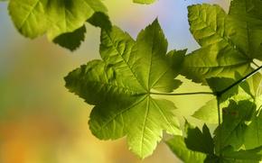 Wallpaper leaves, macro, light, nature