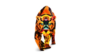 Picture tiger, color, color, white background