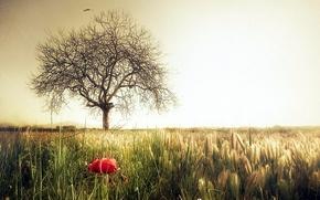 Picture field, flower, style, tree