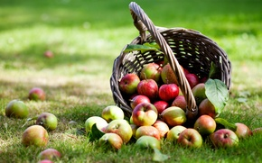 Picture basket, apples, weed, leaves