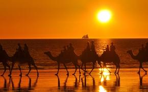 Picture sea, the sun, sailboat, camels, caravan, tourists