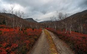 Picture road, autumn, landscape