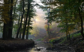 Picture forest, rays, stream, solar