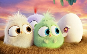 Picture cartoon, egg, socket, birds, Hatchlings Angry Birds