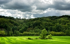 Picture greens, field, grass, trees, clouds, hills, Italy, Lugagnano Val dArda