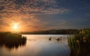 Picture the sky, water, the sun, clouds, trees, landscape, sunset, flowers, birds, nature, lake, pond, mood, …
