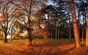 Picture autumn, the sun, trees, Park, foliage, yellow