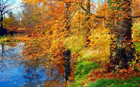 Picture GRASS, LEAVES, POND, TREES, BRANCHES, POND, AUTUMN, FOLIAGE