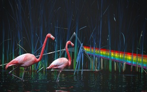 Picture Pond, Pink Floyd, Flamingo, Dark Side Of The Moon, Dispersion of light, The Dark Side …