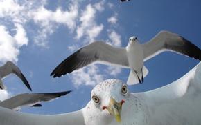 Picture Flight, Beak, Seagulls