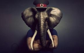 Picture elephant, cap, tusks, trunk