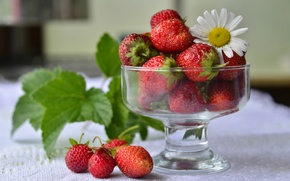 Wallpaper red, berries, Daisy, strawberry, vase