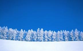 Wallpaper minimalism, trees, Winter