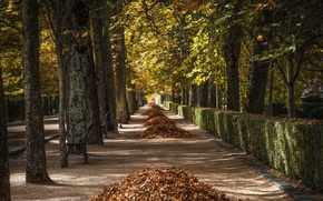Picture autumn, leaves, the city, street