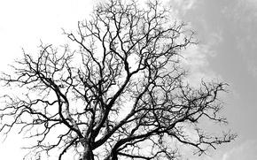 Picture Autumn, tree, death, leaf, samsara