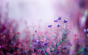 Wallpaper bokeh, macro, nature, pink, Flowers, lilac, field