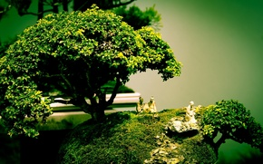 Picture tree, bonsai, art, figure, composition