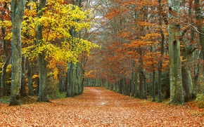 Picture leaves, trees, Autumn, track, falling leaves, grove, autumn, leaves