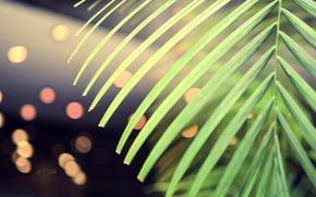 Picture greens, macro, Palma, Wallpaper, saver, bokeh, pulls