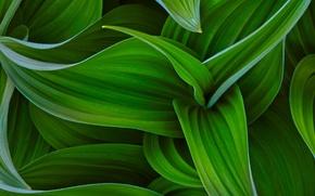 Picture HTC, Original, HTC Sense, Curves of green
