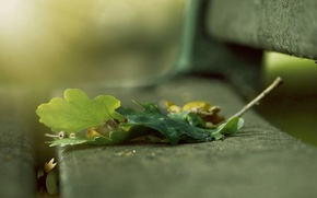Picture bench, blur, Leaves, bobovye