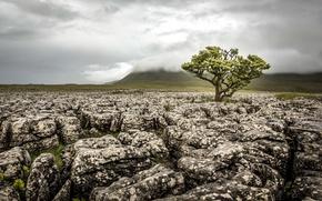 Picture field, stones, tree