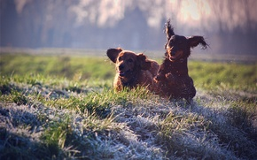 Picture dogs, grass, joy, squirt, mood, lawn, stay, dog, walk, colours, dogs