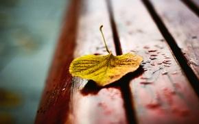 Picture autumn, drops, macro, bench, yellow, sheet, blur, shop, shop, bench