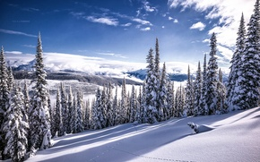 Picture winter, snow, beauty, Canada