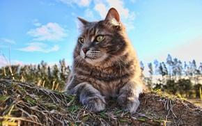 Picture cat, summer, cat, look