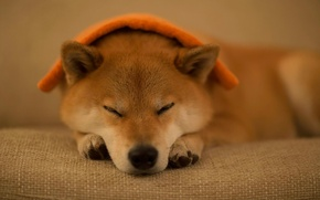 Picture each, dog, sleeping