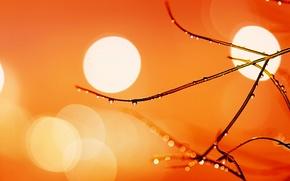 Picture drops, light, Rosa, branch, Blik