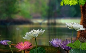 Picture leaves, tree, Lotus, water lilies