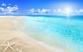 Picture beach, sea, sun, sand, seashell, starfish