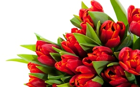 Picture leaves, flowers, stems, bright, beauty, petals, tulips, red, red, flowers, beauty, petals, bouquet, bright, Tulips