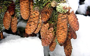 Picture winter, tree, Branch, bump