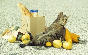 Picture cat, drop, purchase