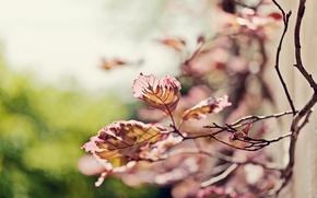 Wallpaper focus, blur, branch, bokeh, sprig, nature, leaves