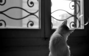 Wallpaper kitty, animal, window, bubble, curiosity, grid