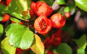 Picture Orange, green, flowering