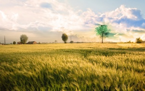 Wallpaper tree, color, Field
