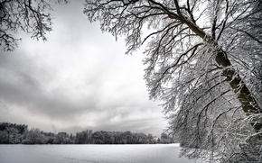 Picture white, snow, trees, Winter