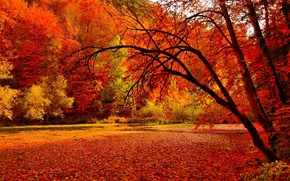 Picture autumn, forest, leaves, trees, lake, pond