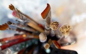 Picture macro, brush, hudojestvennye